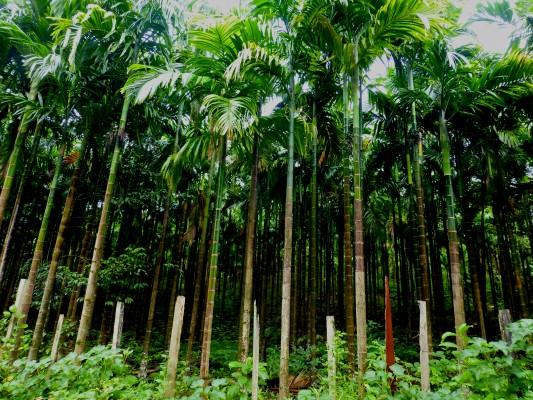 Really beautiful bamboo
